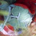 Цветная керамика: сорок два года компании Pentik