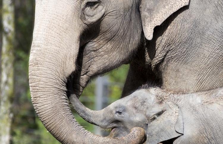 В зоопарке откроют Музей слонов