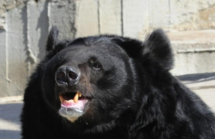 Началась зима: медведи в зоопарке впали в спячку