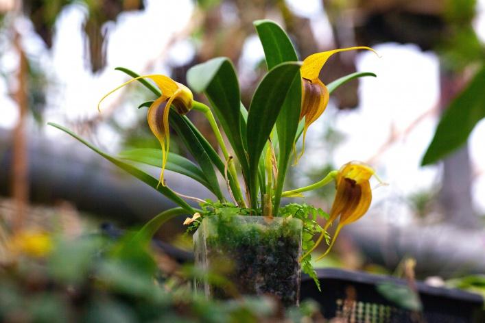 В «Аптекарском огороде» открывается фестиваль «Тропическая зима»