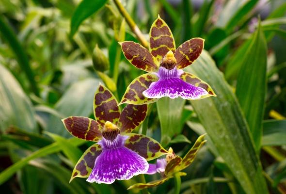 бабочки - Фото №3