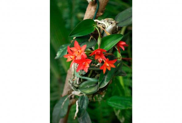 бабочки - Фото №2