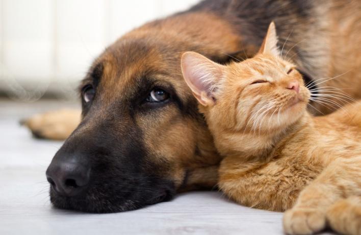 Мосгордума хочет прочипировать всех домашних животных