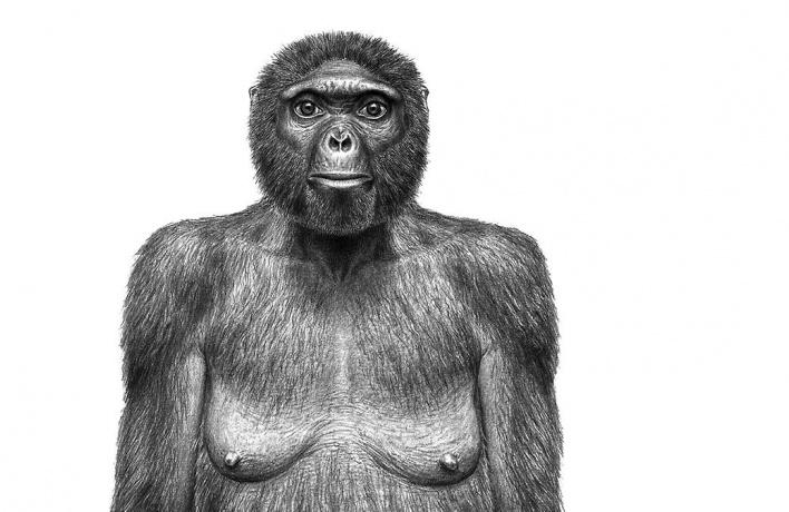 К 14 февраля Дарвиновский музей покажет череп «первой Джульетты»
