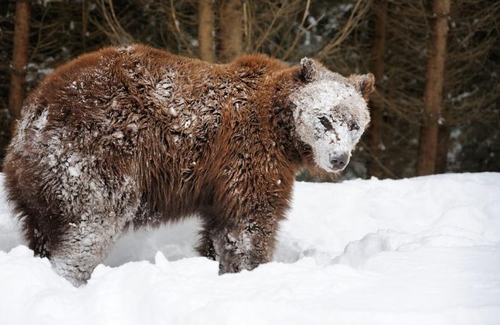 Медведи вернулись в Подмосковье