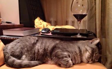 Московские кошки не любят Гордона и сидят в фейсбуке
