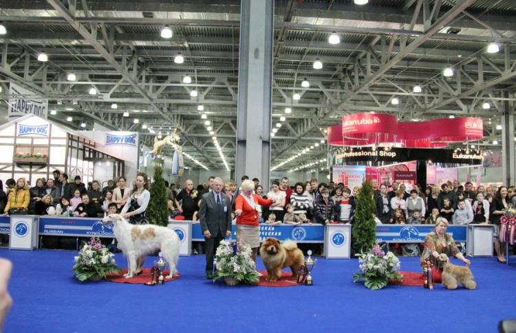Ярмарка собак «Евразия»