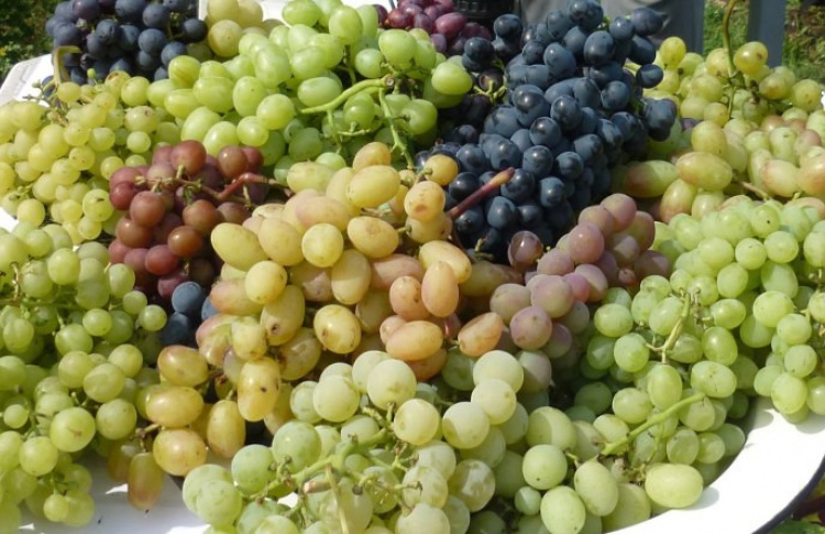 Московский клуб виноградарей