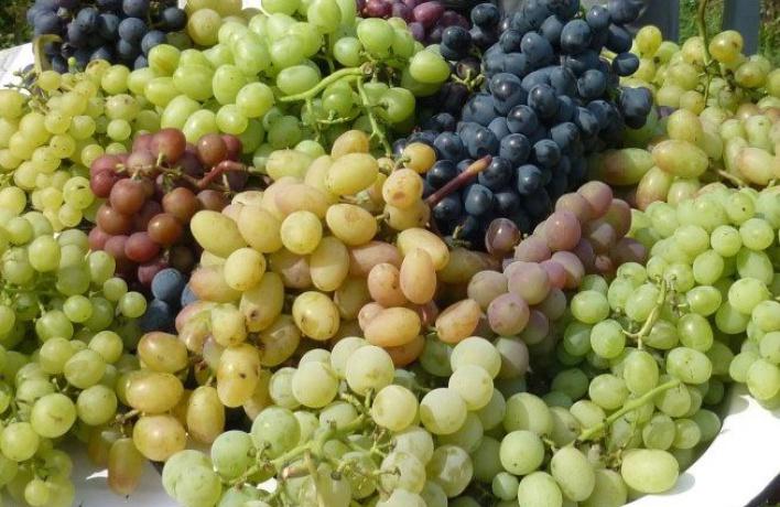 В Аптекарском огороде откроют клуб виноградарей