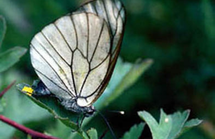 Выставка живых тропических бабочек и других насекомых