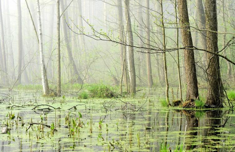 Зоопарк отпразднует День рек и болот