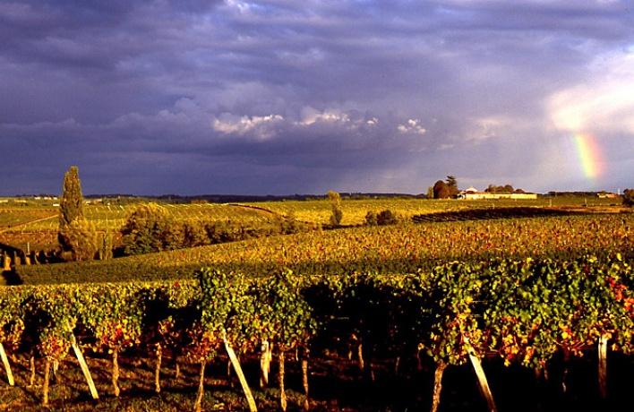 Дегустация белых вин из Бордо