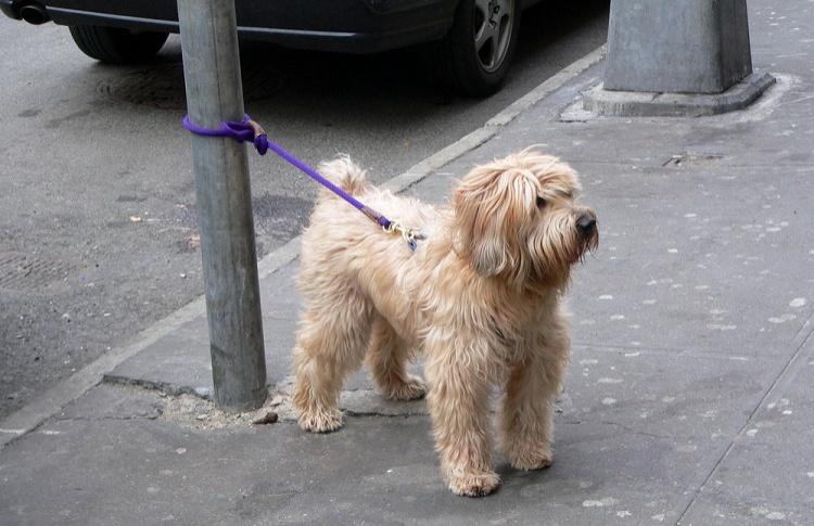Перед магазинами могут появиться парковки для собак