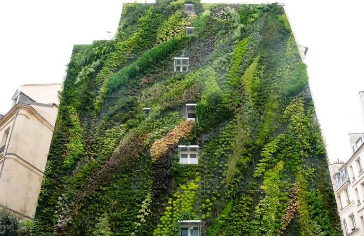 Дома на старом Арбате увьют растениями