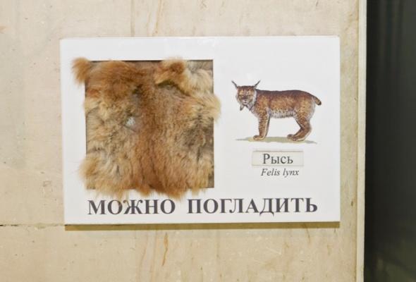 Дарвиновский музей - Фото №12