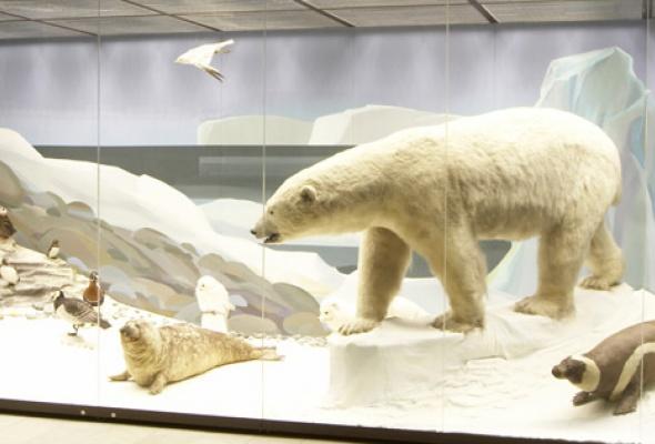 Дарвиновский музей - Фото №10
