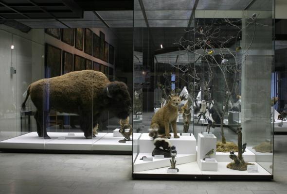 Дарвиновский музей - Фото №5