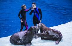 «Москвариум»: что происходит в самом большом океанариуме России