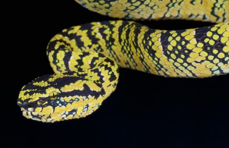 В зоопарк привезут 25 новых ядовитых змей