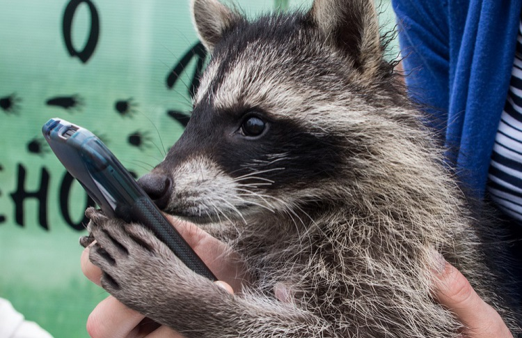 В зоопарке, Царицыно и на Воробьевых горах запустят бесплатный wi-fi