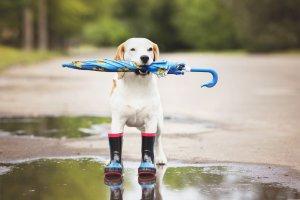 Одевайтесь теплее и не промокайте