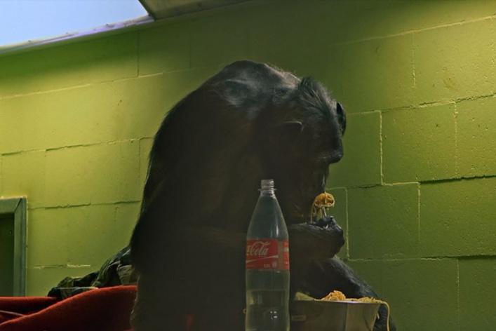 Блошиный рынок в саду им. Баумана, графика Малевича и концерт Fall Out Boy: уикенд в Москве