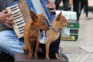 В Москве могут ввести штрафы за попрошайничество с животными
