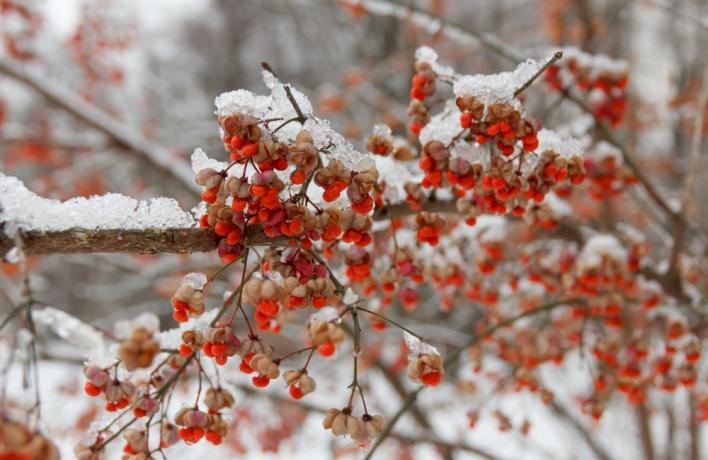 Начало декабря будет аномально теплым