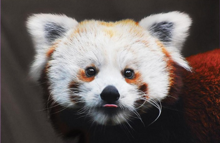 Животные из зоопарка теперь смотрят на вас с плакатов