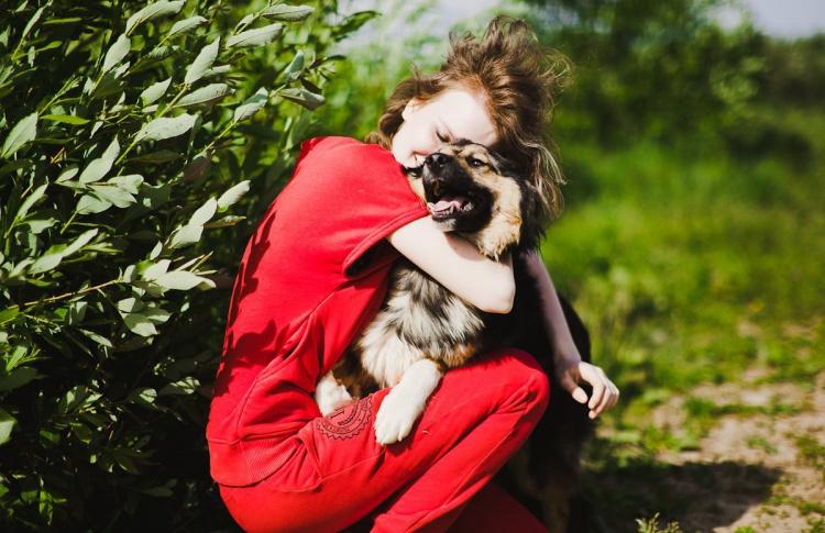 Как существуют приюты для бездомных собак в Москве