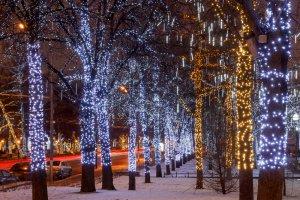 Деревья в Москве больше не будут опутывать гирляндами
