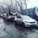 Из-за циклона деревья в Москве будут падать до вечера