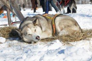 Во вторник в Москву придут зимние морозы