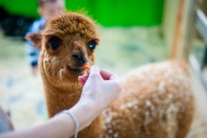 Экскурсии в контактный зоопарк