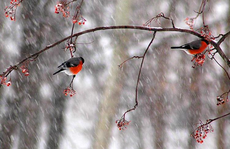 Погода с 18 по 24 января: станет теплее, но пасмурнее