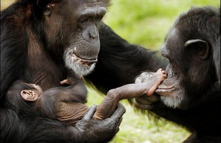 К 14 февраля Дарвиновский музей откроет выставку про животную любовь