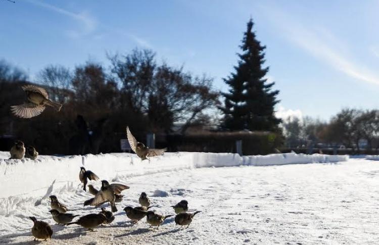 Зимовка в Музеоне