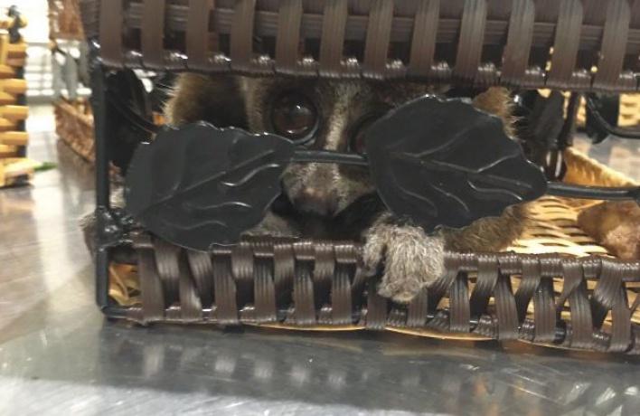 В Москве задержали вьетнамца с чемоданом обезьян