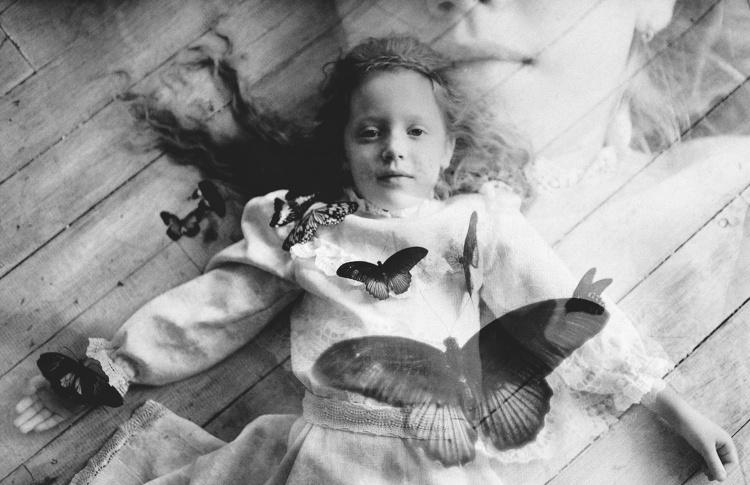 Фотовыставка «Рисунок крыла бабочки»