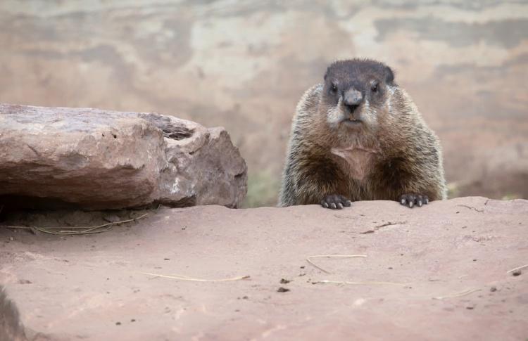 Сурки в зоопарке отказались отмечать День сурка