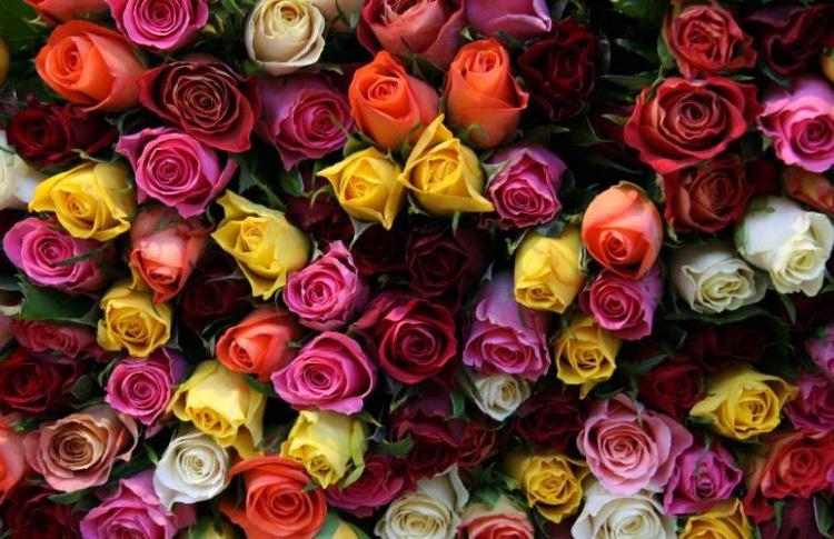 К 8 марта в Москву завезли 10 млн живых цветов