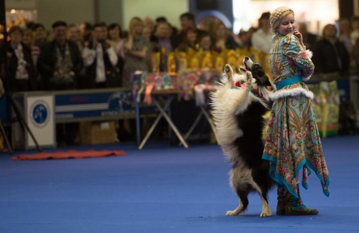 В Москве пройдет чемпионат мира по танцам с собаками