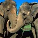 В Московском зоопарке наконец-то откроют Музей слонов