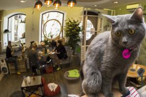 Котов выгоняют из котокафе!