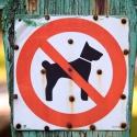 Скоро штраф за выгул собак на детских площадках вырастет