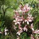 В «Аптекарском огороде» пройдет весенний фестиваль цветов