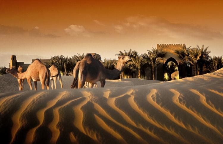 Провести ночь в пустыне