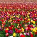 В этом году в Москве посадят 61 миллион цветов