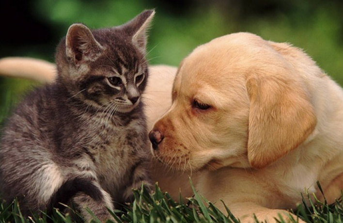В Мосгордуме предложили обязательную регистрацию домашних животных