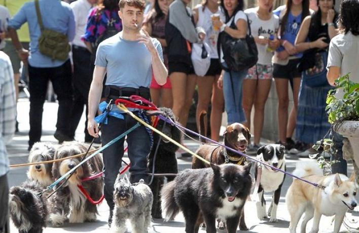 В Москве запустили первый сервис по выгулу собак